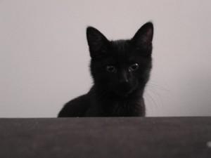 mowgli petit